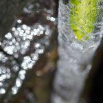 美しい氷のアップ