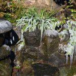 池のまわりの植物が凍っている