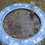 ハスの鉢に氷がはる