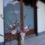 梅の花と庫裡玄関