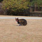 本堂前の猫