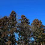 そびえ立つ樹木青い空
