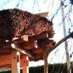 斜陽の茅葺き屋根