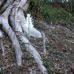 木の根元にさした御幣(ごへい)