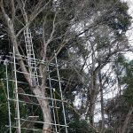 墓地の崖の樹木伐採の足場