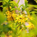 黄色い花 2021年3月