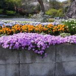 山門の花 2021年4月の写真