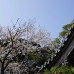 鐘楼と桜 2021年4月の写真