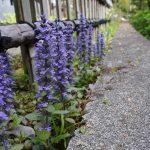 紫の花 2021年4月の写真