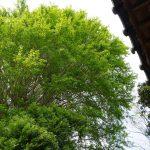新緑 2021年4月の写真
