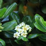 白い花 2021年4月の写真