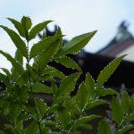 雨水と葉っぱ