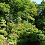 新緑の中庭
