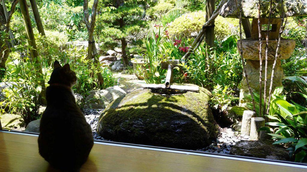 中庭をのぞむ猫