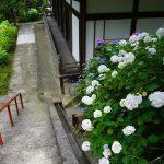 本堂横の階段とアジサイ